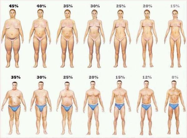 analiza telesnog sastava