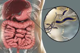 helikobakterija